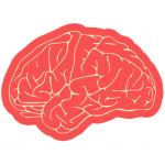 Dil, beyin ve biliş